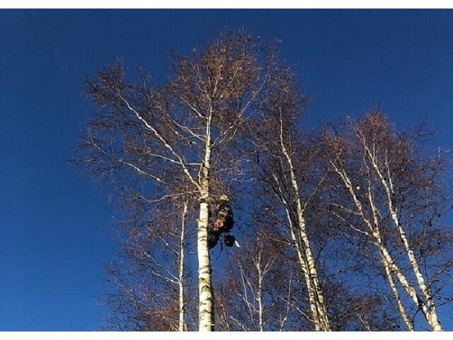 Удаление деревьев любой сложности, расчистка участков