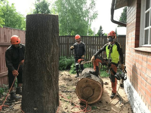 Стрижка и обрезка деревьев