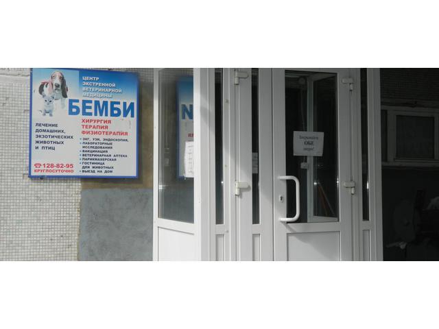 Ветеринарная клиника на улице Цюрупы 3.